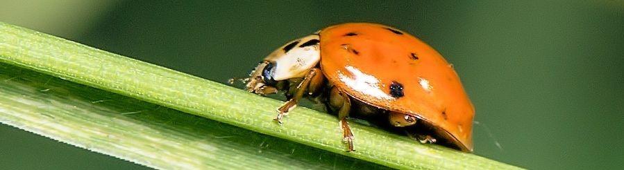 Romei Coaching - Mentale Prüfungsvorbereitung Käfer auf einem Blatt